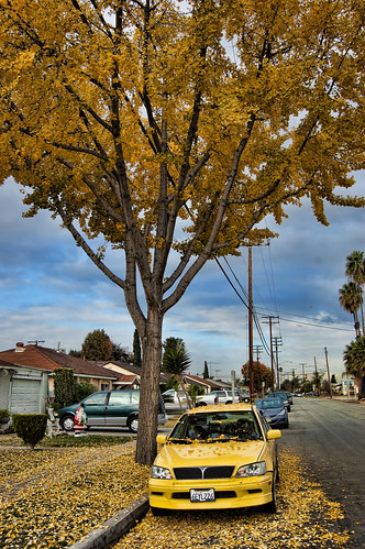 car under tree vertical