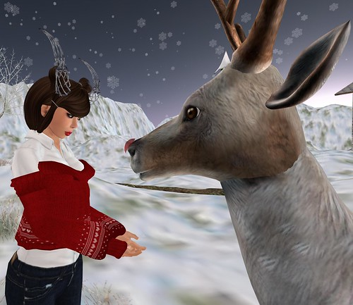 Regina feeds the reindeer