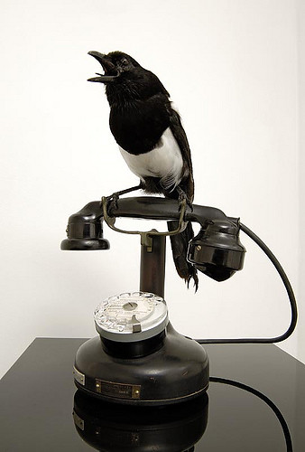 taxidermied bird sitting on a phone