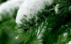 Зелень - зима by SetFly