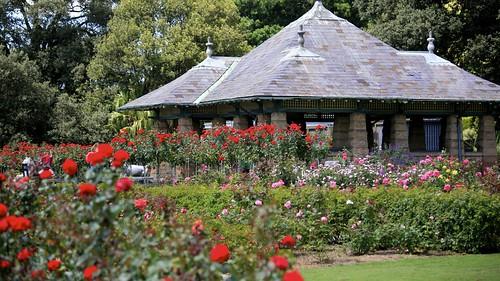 Roses in the Botanical Gardens