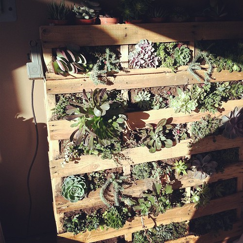 Succulent wall! Weighs 500+ lbs but so gorgeous.