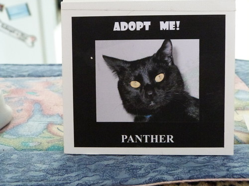 Erm... No Thanks, Panther