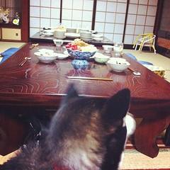 人間様はいいね・・・ #shiba #dog