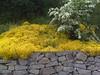 #foto #gelb #weiss #Pflanzen #plankstadt