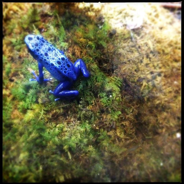 Dallas Texas World Aquarium Frog Toad Tropical Rain Forest