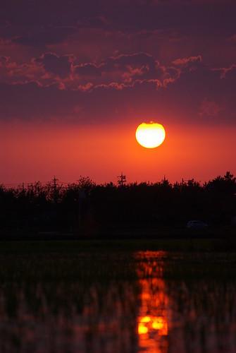 sunset silhouette ricepaddy pentaxk10d