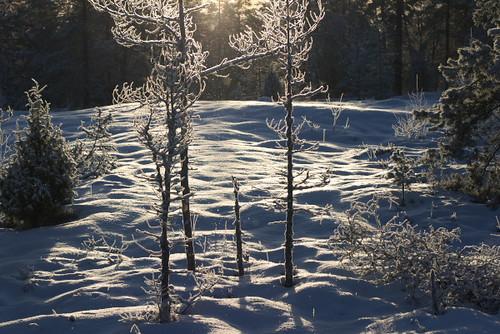 Frost by Rollofunk