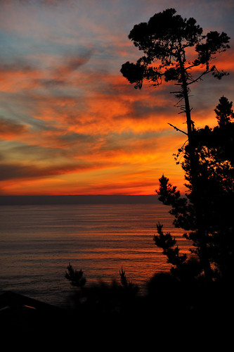 Pine-Tree-Sunset
