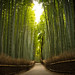 the path of bamboo, revisited #16 (near Tenryuu-ji temple, Kyoto) by Marser