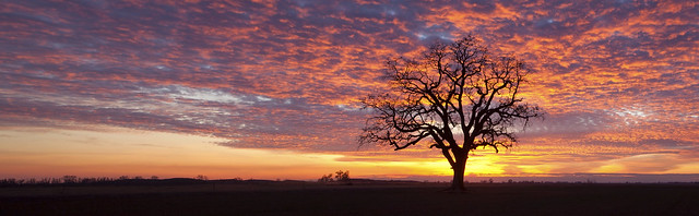 The Sunset Tree