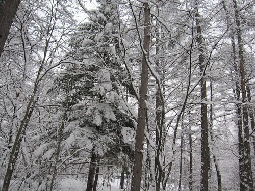 雪降り続く・・・ by Poran111