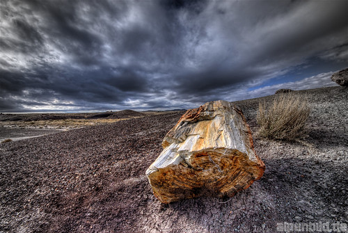 Petrified Wood at Bad Weather