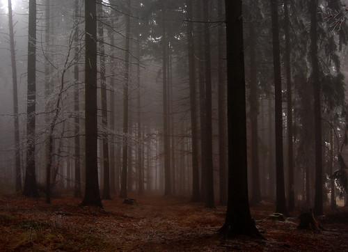 trees mist tree misty fog forest sadness highlands silent sad path empty hill foggy silence czechrepublic bohemia emptiness melancholic vysočina česko českárepublika vysocina vysoká českomoravskávrchovina železnéhory