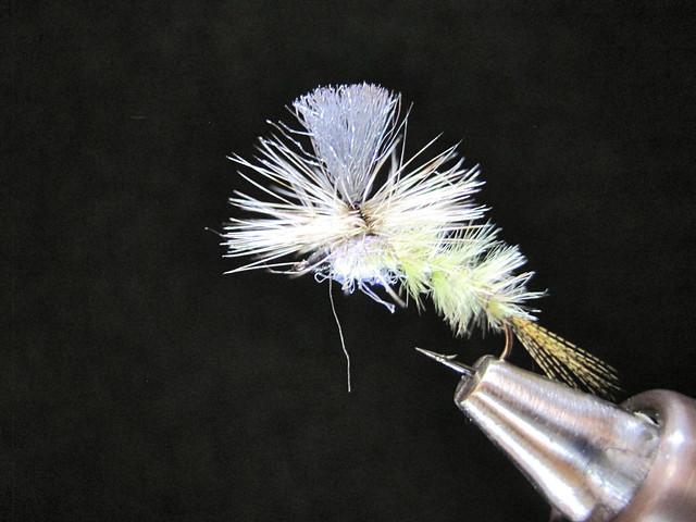 Klinkhammer Callibeatis