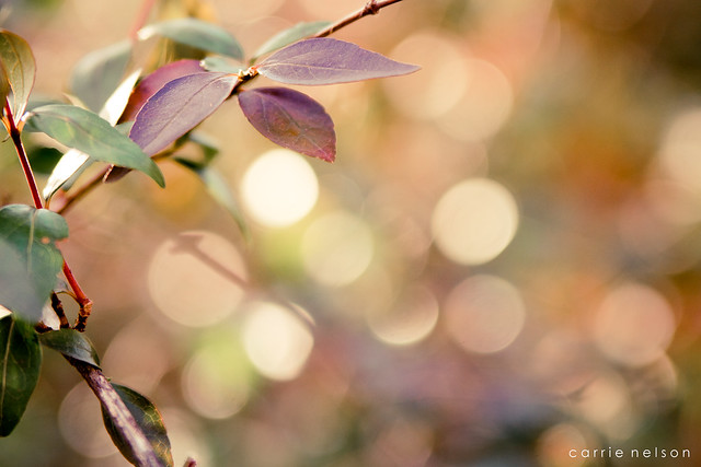 week four: bokeh