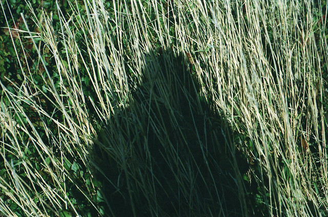 In the tall grasses of the west flickr photo sharing for Tall ornamental grasses for screening