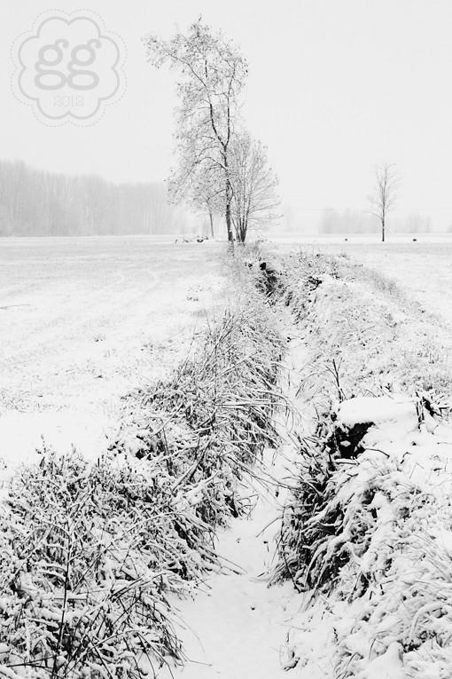 campagna in bianco e nero