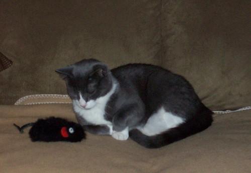 Yuri the cat and friend