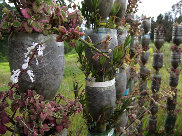 Jardines verticales  Flickr - Photo Sharing!