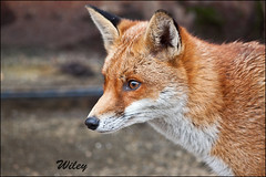 Wiley today Explored   124  feb 2012