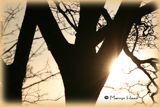 A Winter's Afternoon Sunflare.