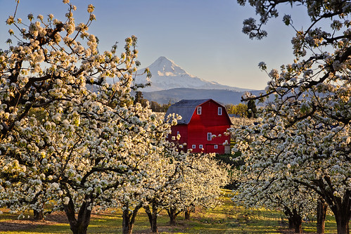 blue red sky flower tree weather oregon barn project river landscape blossom clear pear hood select