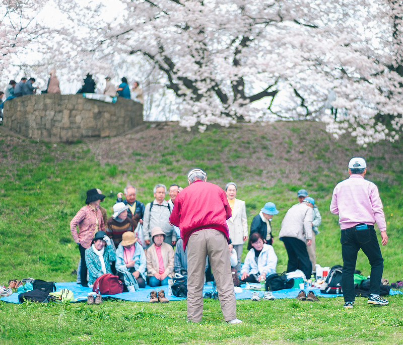 21.Roaming Under The Cherry Blossoms.