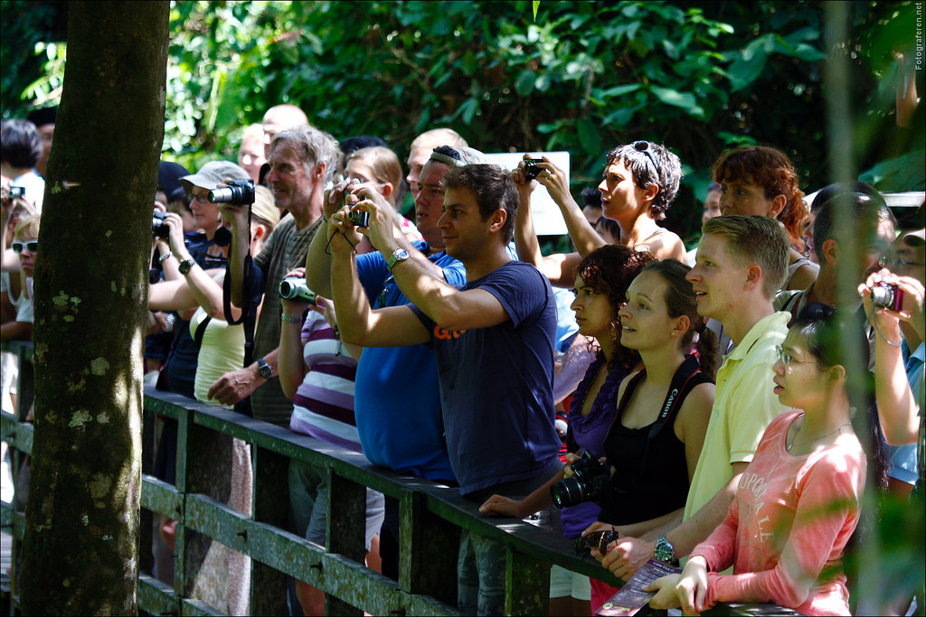 Tourists watching from the shade at the Sepilok Orang Utan Sanctuary