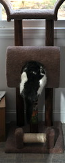 Aremids new cat tree-1