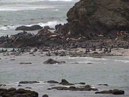 Simpsonreef.seals
