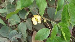 Guyana-2953