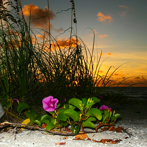verobeach flsunriseflowerssamsung