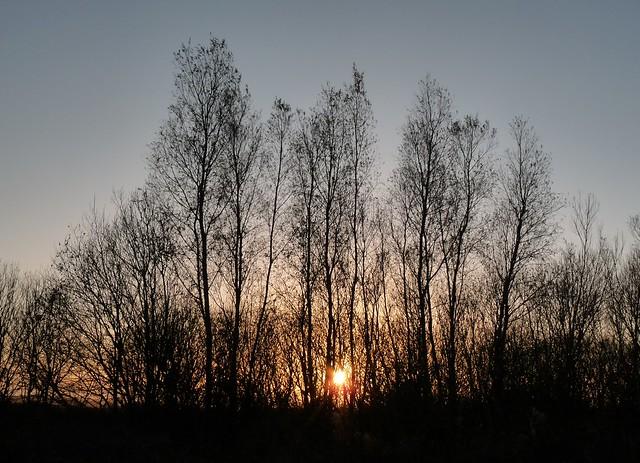 25378 - Starling Murmuration, WWT Llanelli