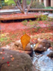 Floating Leaf 2