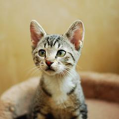 Gratuitous Kittens!