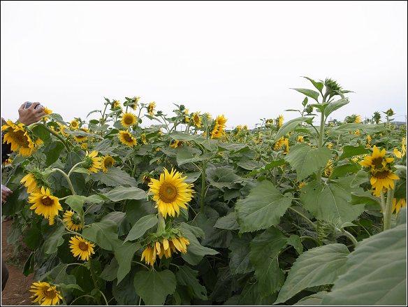 2011臺中國際花毯節20111126_R0044199