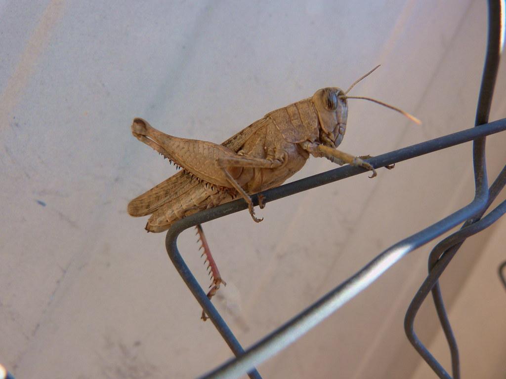 23-11-2011-grasshopper6