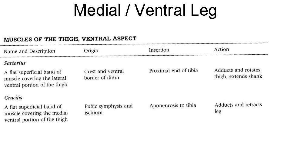 12. Medial Leg Muscles OIA