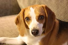 Animal Kind Veterinary Hospital | Pet Grooming | 11215 | Brooklyn | 2