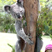 Austin Featherdale Wildlife Park