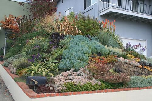 Succulent Rock Garden Ideas Photograph Ducote Barnes Front