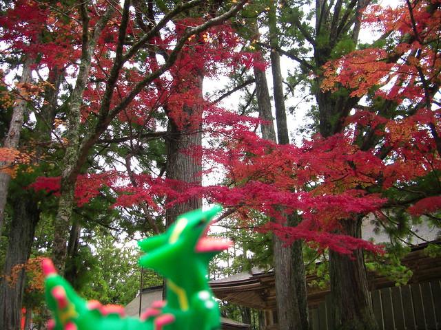 Photo:Rayquaza in Koya,Wakayama 66 (Kongobuji Temple) By Kasadera