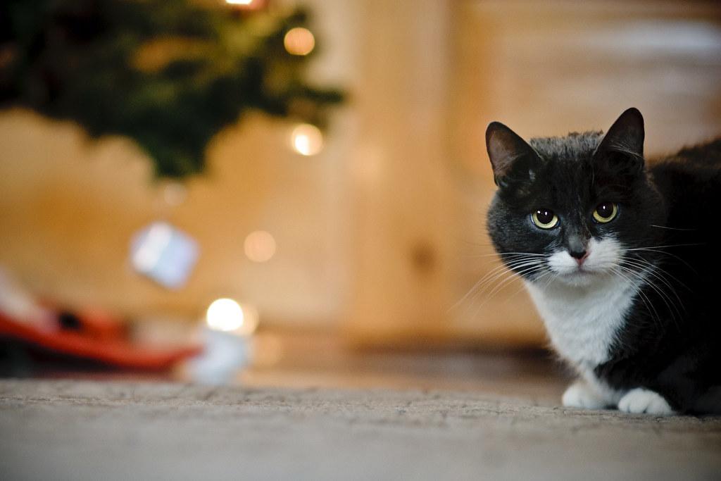 Cat #361/365