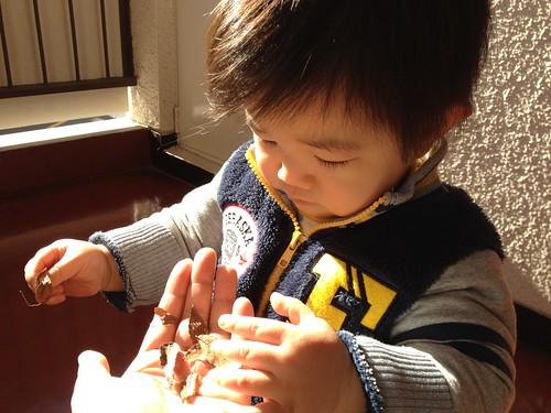 枯葉で遊ぶとらちゃん2 (2011/12/30)
