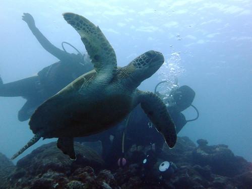 ウミガメと記念撮影