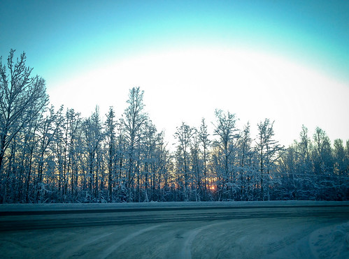 road trees sunset alaska iphone