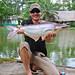 Striped catfish eli joku monnin sukulainen