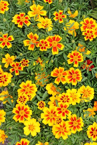 Flowers & Coriander