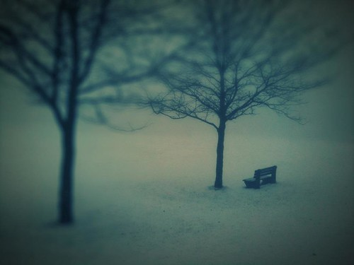 two trees and a bench by kim/ber